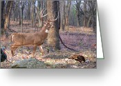 Deer Greeting Cards - Deer Art - Perfect Ten - Wide View Greeting Card by Deer Artist Dale Kunkel
