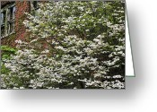 Dogwood Blossom Greeting Cards - Dogwood Changes Everything  Greeting Card by JC Findley