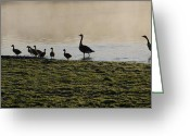Bill Cannon Greeting Cards - Duck Family Panorama Greeting Card by Bill Cannon
