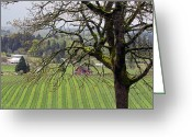 Elizabeth Rose Greeting Cards - Dundee Hills Wine Country Greeting Card by Elizabeth Rose
