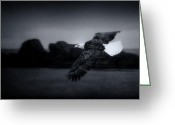 Eagle In Flight Greeting Cards - Eagle In Flight Adak AK 1976 Greeting Card by John Rodriguez
