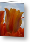 Brian Jones Greeting Cards - El Nino Tulips Greeting Card by Brian Jones