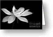 Lotus Seed Pod Greeting Cards - Elegance  Greeting Card by Sabrina L Ryan