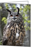 Barbara Mcmahon Greeting Cards - Eurasian Eagle Owl Greeting Card by Barbara McMahon