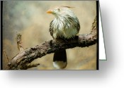 Animalia Greeting Cards - Exotic Bird - Guira Cuckoo Greeting Card by Gary Heller