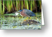 Larry Ricker Greeting Cards - Eye to Eye Greeting Card by Larry Ricker