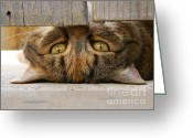 Playful Kitten Greeting Cards - Eyes Under the Gate Greeting Card by Courtney Bailey