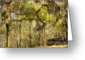 Live Oak Trees Greeting Cards - Fabulous Spanish Moss Greeting Card by Christine Till