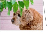 Mary Deal Greeting Cards - Faithful Old Bud Greeting Card by Mary Deal