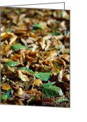 Maroon Greeting Cards - Fallen Leaves Greeting Card by Carlos Caetano
