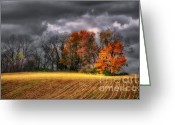 Bare Trees Greeting Cards - Falling Into Winter Greeting Card by Lois Bryan