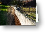 Wetmore Greeting Cards - Fence Top Greeting Card by Tim  Fitzwater