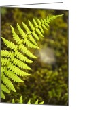Lime Digital Art Greeting Cards - Fern Greeting Card by Christina Rollo