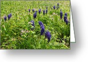 Adam Long Greeting Cards - Field of Blue Bells and Nightshade Greeting Card by Adam Long
