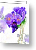 Watercolor Flowers Prints Greeting Cards - Floral series - Orchid Greeting Card by Moon Stumpp