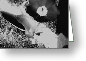 Black And White Photos Mixed Media Greeting Cards - Floral Silhouette Greeting Card by Elizabeth Calder