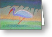 Setting Pastels Greeting Cards - Florida Ibis Greeting Card by Daniel Wend