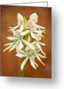White Flower Greeting Cards - Flower - Orchid - A gift for you  Greeting Card by Mike Savad
