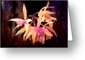 Orange Flower Photo Greeting Cards - Flower - Orchid - Laelia - Midnight Passion Greeting Card by Mike Savad