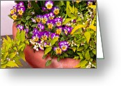 Tricolor Greeting Cards - Flower - Pansy - Purple Posies  Greeting Card by Mike Savad