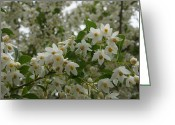Mick Anderson Greeting Cards - Flowering Tree Greeting Card by Mick Anderson