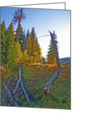 Rural Landscapes Mixed Media Greeting Cards - Forest Rural Scene Greeting Card by Steve Ohlsen