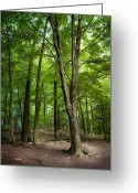 Lustrous Greeting Cards - Forest - Trees - The woods Greeting Card by Gary Heller