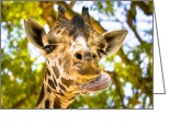 Goofy Greeting Cards - Giraffe Cleaning His Face Greeting Card by Mark Tisdale