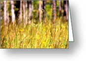 Carol Groenen Greeting Cards - Golden Mississippi Nature Greeting Card by Carol Groenen