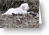 Temperament Photo Greeting Cards - Golden Retriever Puppy 2 Greeting Card by Andrea Anderegg 