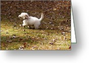 Temperament Photo Greeting Cards - Golden Retriever Puppy Greeting Card by Andrea Anderegg 