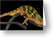 Rain Forrest Greeting Cards - Good Night Chameleon Greeting Card by LeeAnn McLaneGoetz McLaneGoetzStudioLLCcom