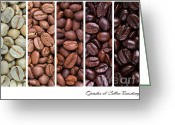 Mocha Greeting Cards - Grades of coffee roasting Greeting Card by Jane Rix