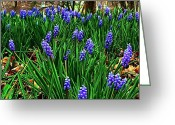 Julie Dant Greeting Cards - Grape Hyacinths II Greeting Card by Julie Dant