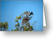Onyonet Photo Studios Greeting Cards - Great Blue Herons-The Handoff Greeting Card by  Onyonet  Photo Studios