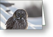 Owl Prints Greeting Cards - Great Gray Owl2 Greeting Card by Chris Lindner