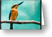 Exotic Birds Greeting Cards - Guam Kingfisher Greeting Card by Gary Heller