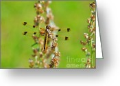 Pennant Greeting Cards - Halloween Pennant Female 2 Greeting Card by Al Powell Photography USA