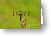 Pennant Greeting Cards - Halloween Pennant Female Greeting Card by Al Powell Photography USA