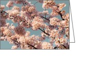 Barbara Mcmahon Greeting Cards - Hanami Greeting Card by Barbara McMahon