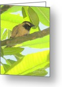 Mary Deal Greeting Cards - Hawaii Bird - Akekee Greeting Card by Mary Deal