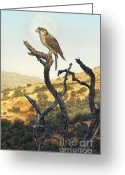 Red-tailed Hawk Greeting Cards - Hawk in the Sunset Greeting Card by Stu Shepherd