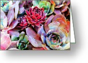 Romantic Floral Greeting Cards - Hens and Chicks series - Copper Tarnish  Greeting Card by Moon Stumpp
