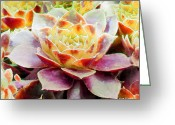 Romantic Floral Greeting Cards - Hens and Chicks Series - Early Morning Quite Greeting Card by Moon Stumpp