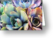 Texture Flower Greeting Cards - Hens and Chicks series - Soft Tints Greeting Card by Moon Stumpp