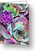 Nature Prints Greeting Cards - Hens and Chicks series - Urban Rose Greeting Card by Moon Stumpp