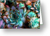 Watercolor Flowers Prints Greeting Cards - Hens and Chicks series - Verdigris Greeting Card by Moon Stumpp
