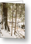 Hidden Valley Creek Greeting Cards - Hiding in the Trees Greeting Card by Tim Grams