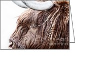 Lamb Greeting Cards - Highland Cow Color Greeting Card by John Farnan