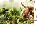 Simon Bratt Photography Greeting Cards - Highland cow laying down Greeting Card by Simon Bratt Photography
